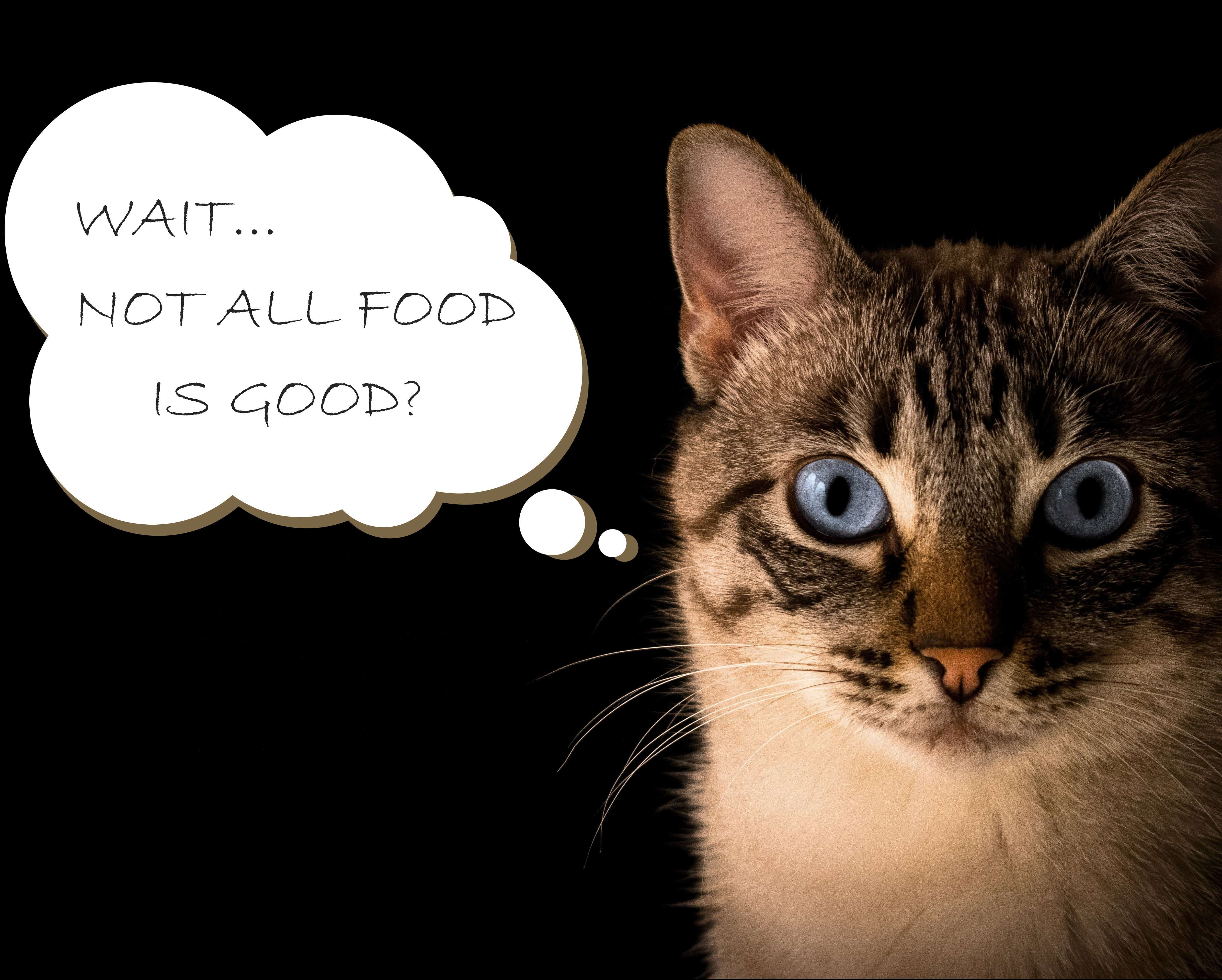 7 Worst Cat Foods 2020 How To Choose A Quality Food