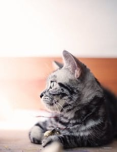 image of a feline looking in distance
