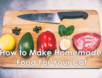 How to Make Homemade Food for Your Cat