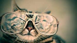 image of a senior feline