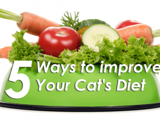 5 Easy Ways To Improve Your Cat's Diet