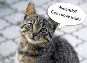 image of a curious feline