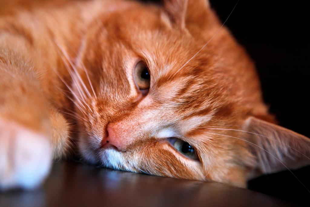 Cat Tapeworm Natural Treatment