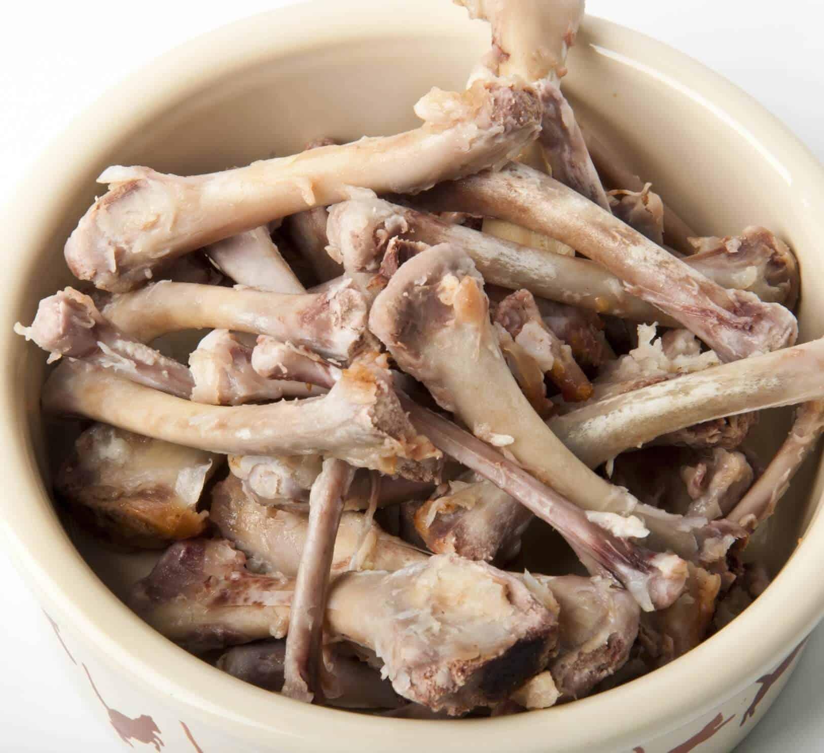 Can A Cat Eat Chicken Bones