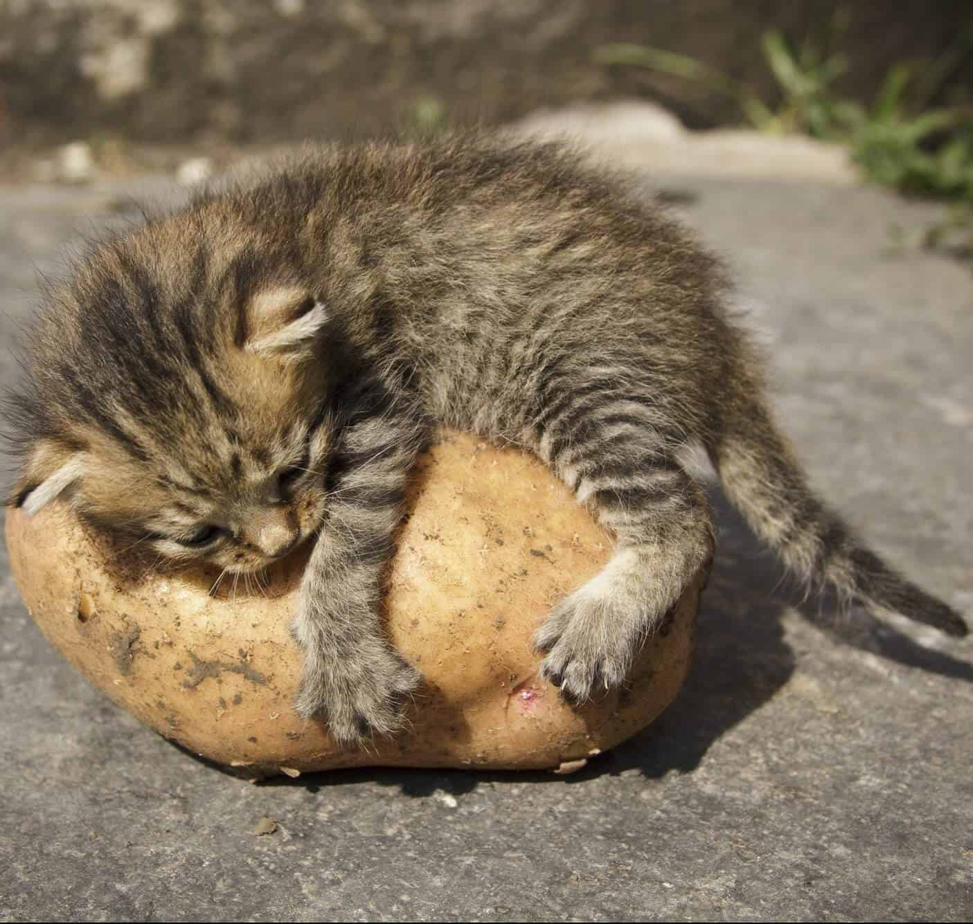 Can Cats Eat Fruits And Veggies