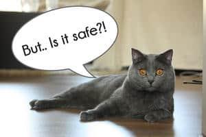 image of a grey feline