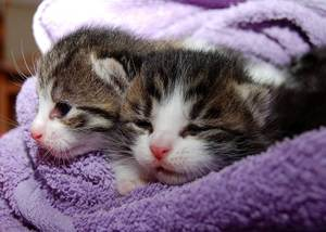 image of two sick kittens
