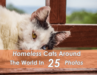 Homeless Cats Around The World In 25 Pictures