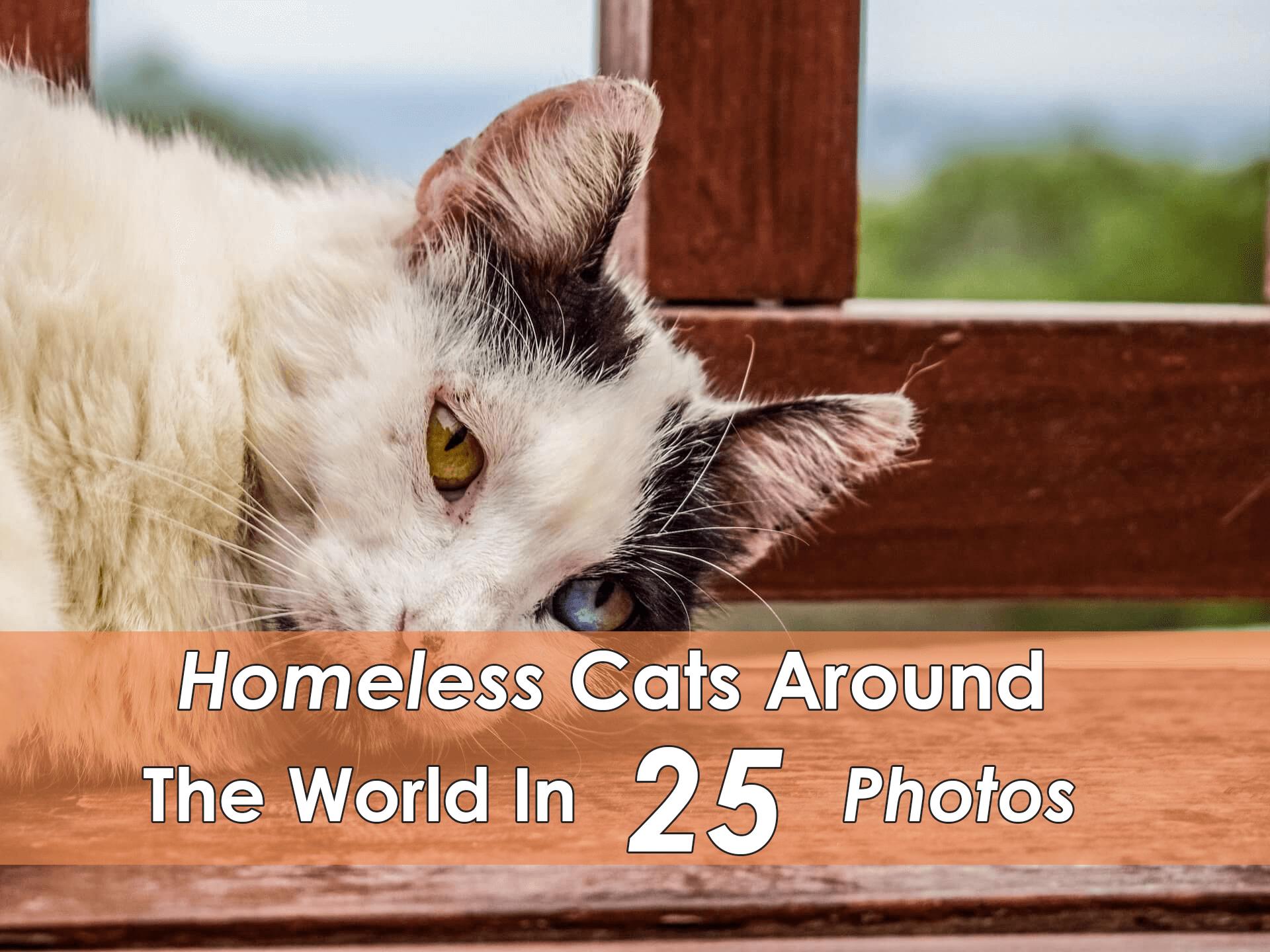 Shelter Cat Names