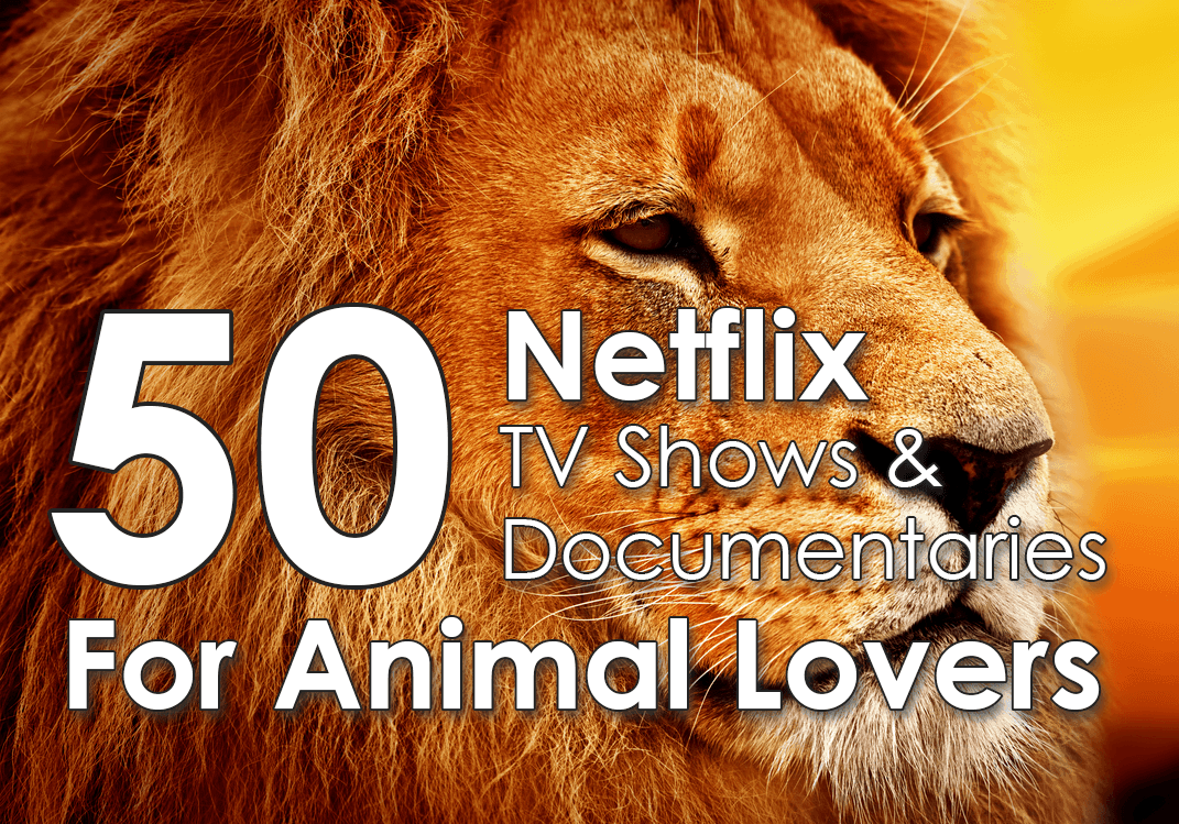 50 netflix shows documentaries for animal lovers for The lion in the living room netflix