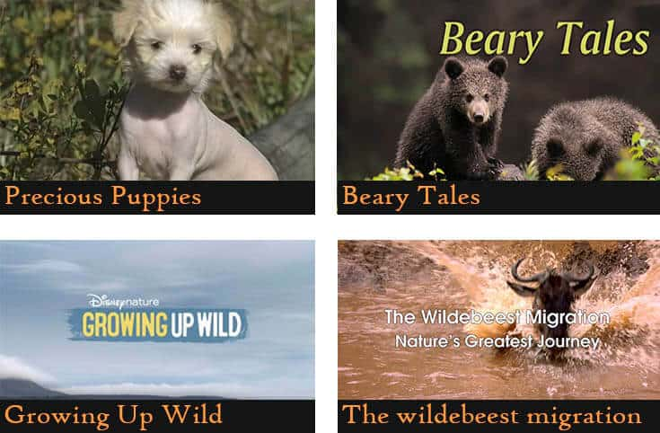 a poster divided into four pictures showing the names of the animal documentaries (Precious puppies, Beary tales, Growing up wild, The wildebeest migration)