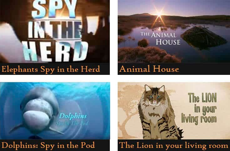 a poster divided into four pictures showing the names of the animal documentaries  (Elephants spy in the herd, Animal house, Dolphins:Spy in the pod, The lion in your living room)
