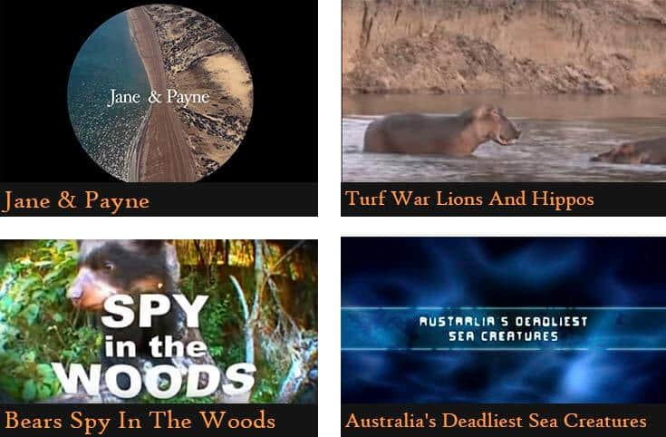 a poster divided into four pictures showing the names of the animal documentaries  (Jane&Payne, Turf war lions and hippos, Bears spy in the woods, Australia's deadliest sea creatures)