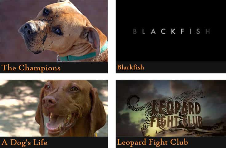 a poster divided into four pictures showing the names of the animal documentaries (The champions, Blackfish, A dog's life, Leopard fight club)