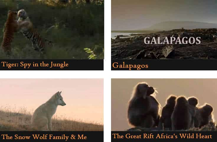 a poster divided into four pictures showing the names of the animal documentaries  (Tiger: Spy in the jungle, Galapagos, The snow wolf family&me, The great rift Africa's wild heart)