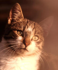 blurry portrait of a cat