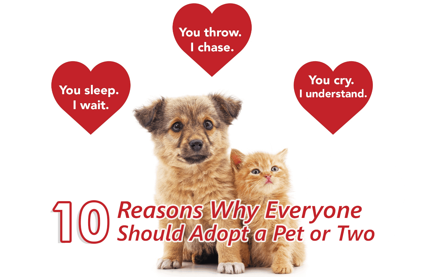 What You Need To Adopt A Cat