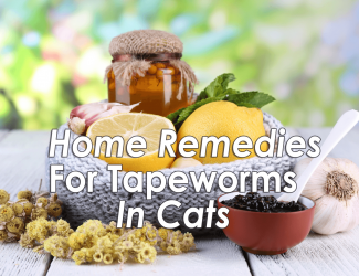 Home Remedies for Tapeworm in Cats – Natural Treatment