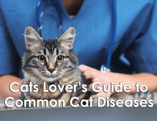 Cat Lover's Guide To Common Feline Diseases [Infographic]
