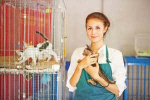 image of a pet shelter worker