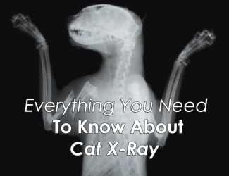 Everything You Need To Know About Cat X Ray