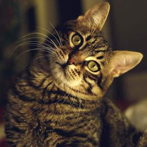 image of a quirky feline