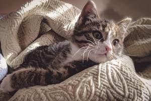 clumsy cat names