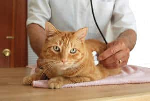 image of a veterinarian with a cat