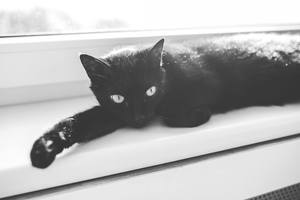 265 Black Cat Names For Your Mysterious Friend