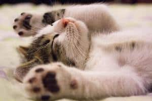 image of a cute girl kitten laying on her back