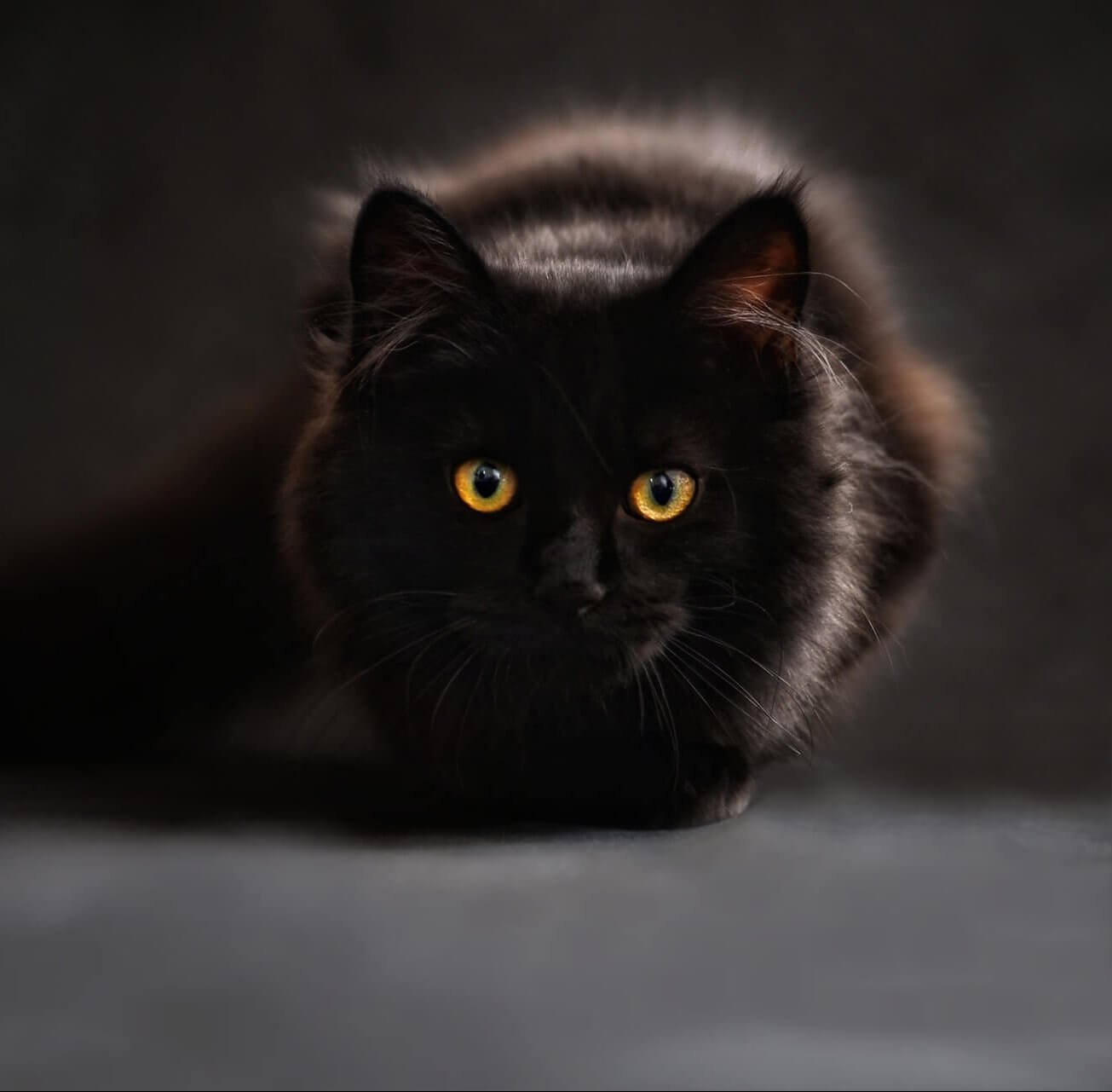 2f8c22ebd47c 265 Black Cat Names For Your Mysterious Friend