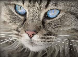 image of a powerful looking feline