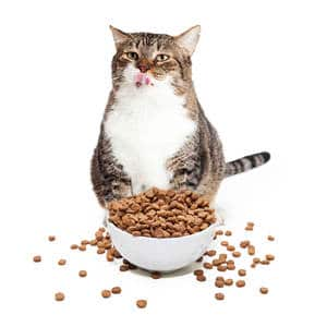 image of an obese feline eating from bowl