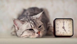 image of a feline and a clock