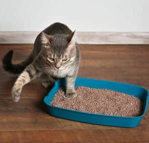 image of a feline in her tray