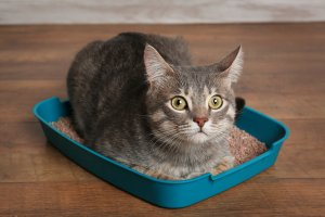 image of a cat laying inside the litter tray