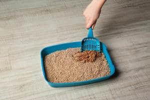 image of a dirty kitty litter tray