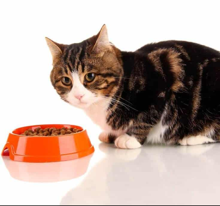 10 Best Cat Foods In 2018 Guide Reviews Of Top Dry Wet Products