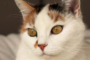 What Should I Name A Calico Cat