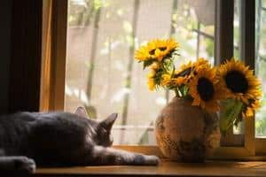 image of alone feline looking through window