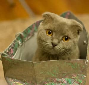 image of a kitty in a paper bag