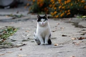 image of a cute kitty