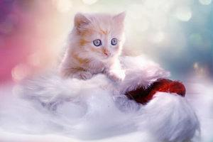 image of a beautiful small kitten on clouds