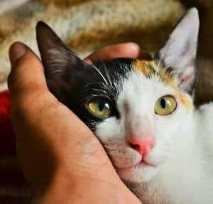 image of a beautiful female kitty