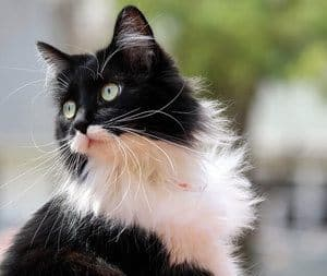 image of a cool looking feline outdoors