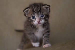 image of a small kitten