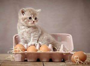 image of a kitty in an egg box