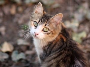 image of a kitty outdoors