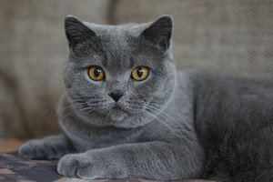 83 Amazing Gray Cat Names For Your Ash-Like Beauty