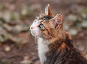 248 Nerdy Cat Names For Your Furball